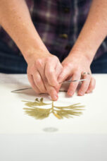 A U-M plant mounter glues clubmoss onto archival paper at the University Herbarium.
